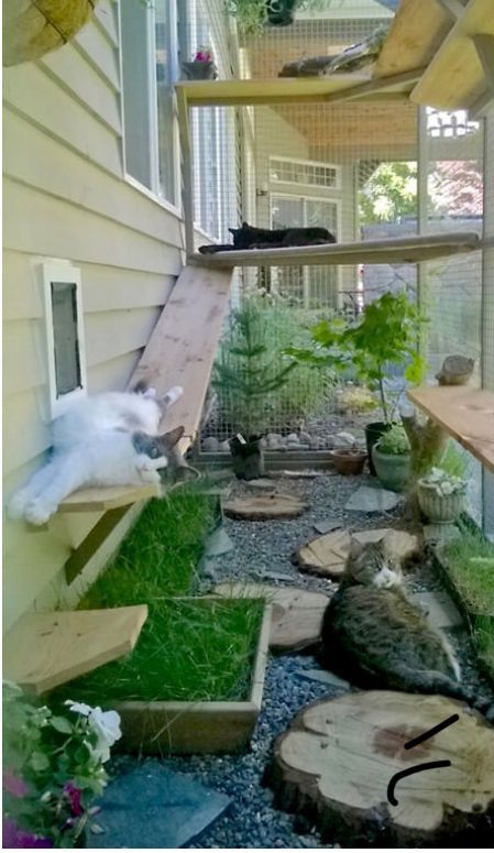 How to Make an Outdoor Cat Playground